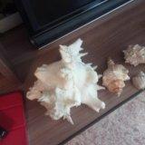 Ракушки с черного моря. Фото 3.