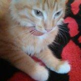 Котёнок. Фото 2.