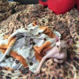 Котята канадского сфинкса. Фото 4. Мытищи.