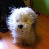 Плюшевая  игрушка собака. Фото 2.