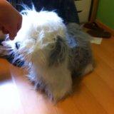 Плюшевая  игрушка собака. Фото 1.