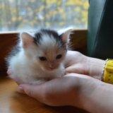 Котята. Фото 2. Иваново.