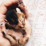 Котики 😻 породистые абиссины. Фото 2.