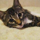 Срочно отдам котенка. Фото 1.