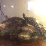 Черепахи. Фото 1.