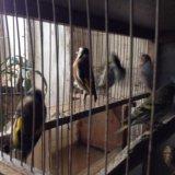 Птицы. Фото 1. Челябинск.