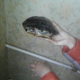 Черепаха водная. Фото 3.