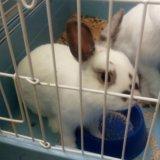 Декоративные кролики. Фото 1.