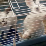 Декоративные кролики. Фото 2.
