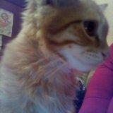 Котик , найден в подъезде !. Фото 1. Красноярск.