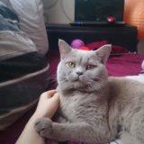 Котик на вязку. Фото 3. Краснодар.