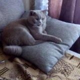 Котик на вязку. Фото 4. Краснодар.