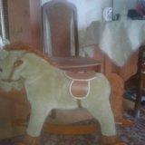 Конь. Фото 3.
