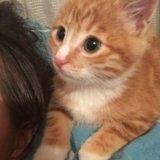 Котёнок. Фото 4. Хабаровск.