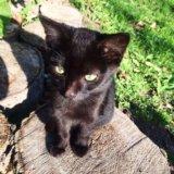 Котята бесплатно в добрые руки. Фото 1.