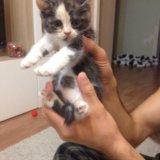 Кошечки в очень добрые руки. Фото 3.