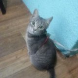 Киса 5,5 месяцев. Фото 1.