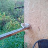 Рыжий котенок ищет дом. Фото 1.