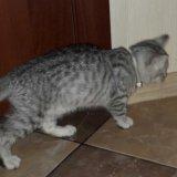 Кошечка. Фото 1. Рязань.
