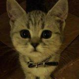 Кошечка. Фото 2. Рязань.