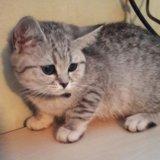 Кошечка. Фото 3. Рязань.