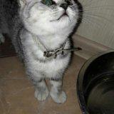 Кошечка. Фото 4. Рязань.