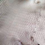 Кожа нильского крокодила. Фото 1.