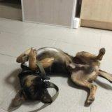 Собака (кабель). Фото 3. Михайловск.