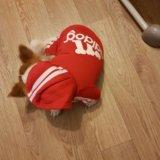 Комбинезон для собаки. одежда для собак. Фото 2.