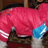 Одежда для собак. Фото 1.