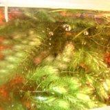 Растения для аквариума. Фото 1.