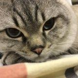 Кот. в самые добрые руки. Фото 1.