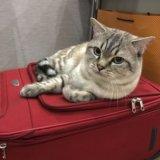 Кот. в самые добрые руки. Фото 3.