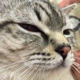 Кот. в самые добрые руки. Фото 2.