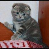 Ищу котенка. Фото 1.