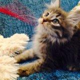 Отдам котёнка в добрые руки. Фото 3.