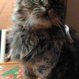 Миниатюрная ласковая кошка. Фото 3.
