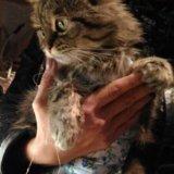 Миниатюрная ласковая кошка. Фото 2.