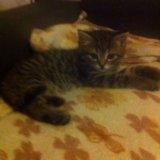 Отдаем котёнка в добрые руки. Фото 1. Москва.