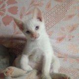 Отдам кошку срочно!!!!. Фото 1.
