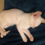 Отдам кошку срочно!!!!. Фото 2.