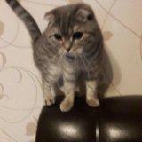 Жду котика. Фото 2. Иркутск.
