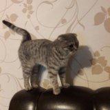 Жду котика. Фото 3. Иркутск.