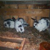 Продам кроликов. Фото 1. Иркутск.
