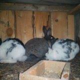 Продам кроликов. Фото 2. Иркутск.