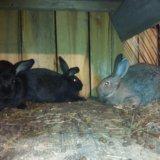 Продам кроликов. Фото 3. Иркутск.