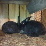 Продам кроликов. Фото 4. Иркутск.