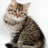 Продам кошку котенка сколько хотите. Фото 2. Москва.