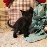 Отдам котят в добрые руки!!!. Фото 2.