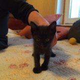 Отдам котят в добрые руки!!!. Фото 1.